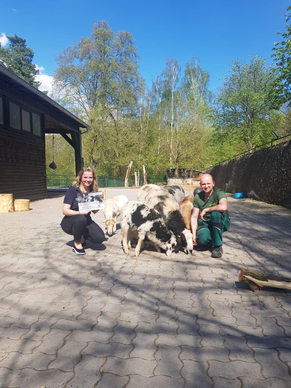 Tierinspektor Steffen Horn und Annekathrin Harant von der Meleghy Automotive GmbH & Co. KG im Gehege der Gescheckten Bergschafe im Ostthüringer Waldzoo Gera